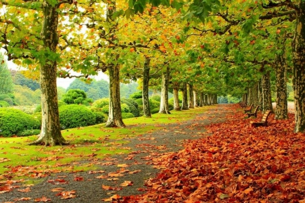 Quest' autunno